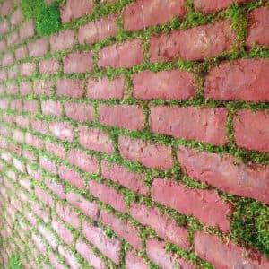 стена со мхом